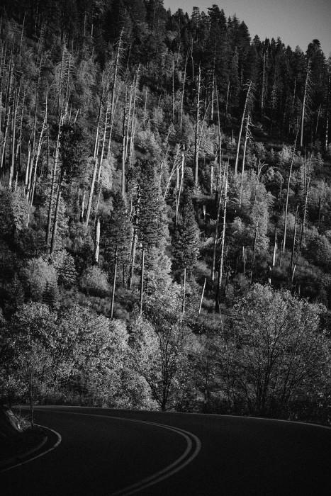 Yosemite tree line black and white