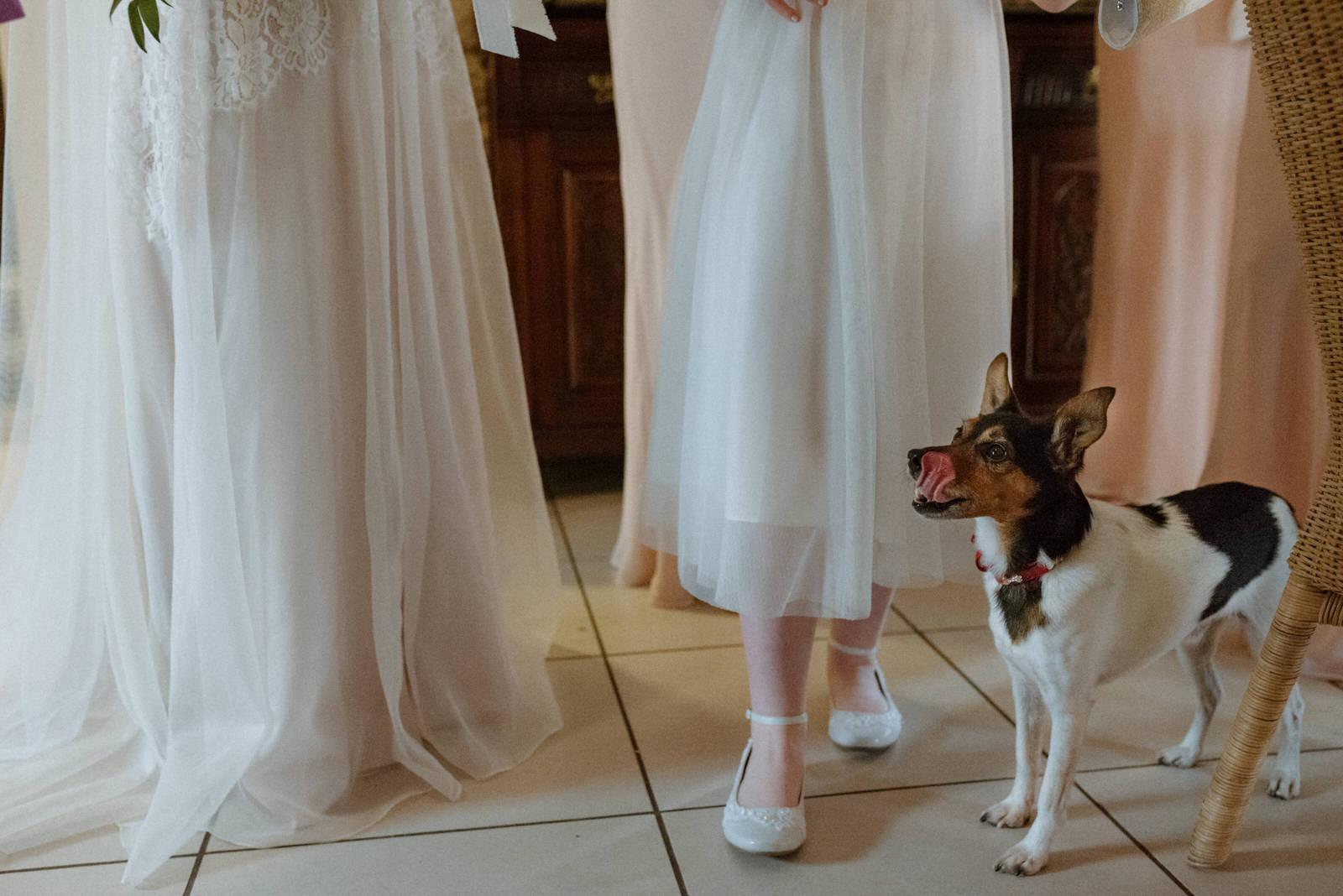 bohemian wedding dog bridesmaid